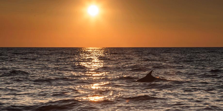 porec-dolfijnen.png